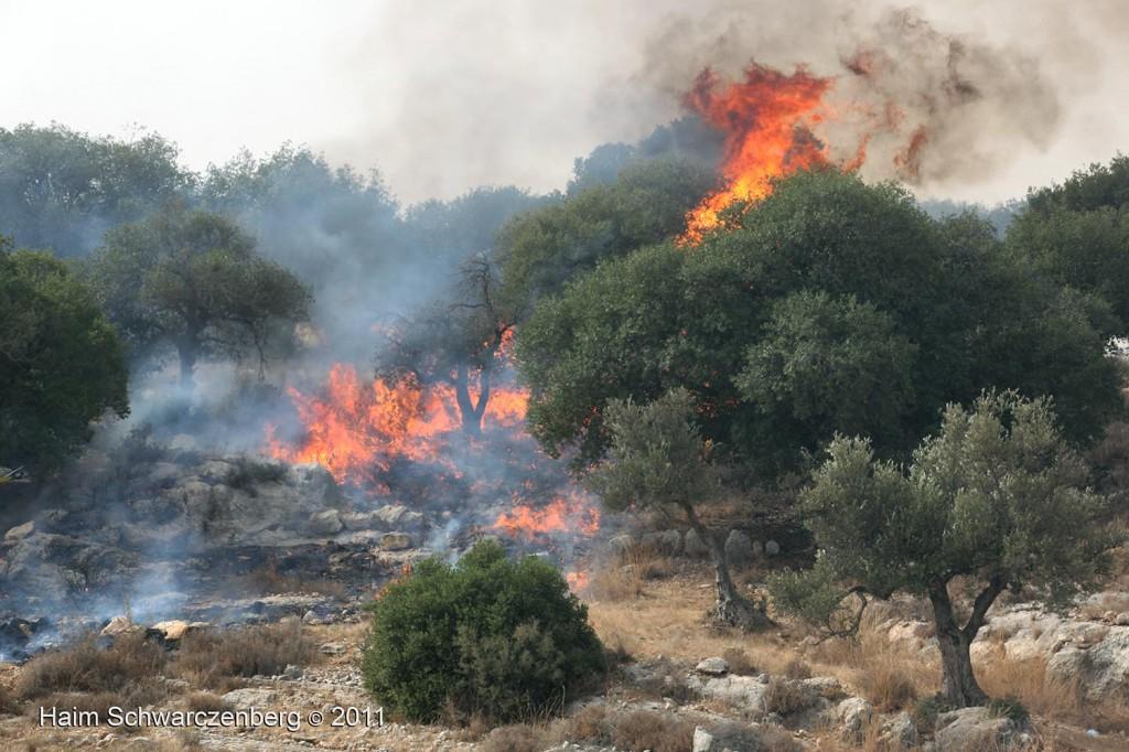 Bil'in 21/10/2011 | IMG_8402