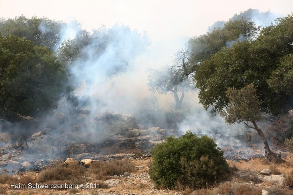 Bil'in 21/10/2011 | IMG_8423