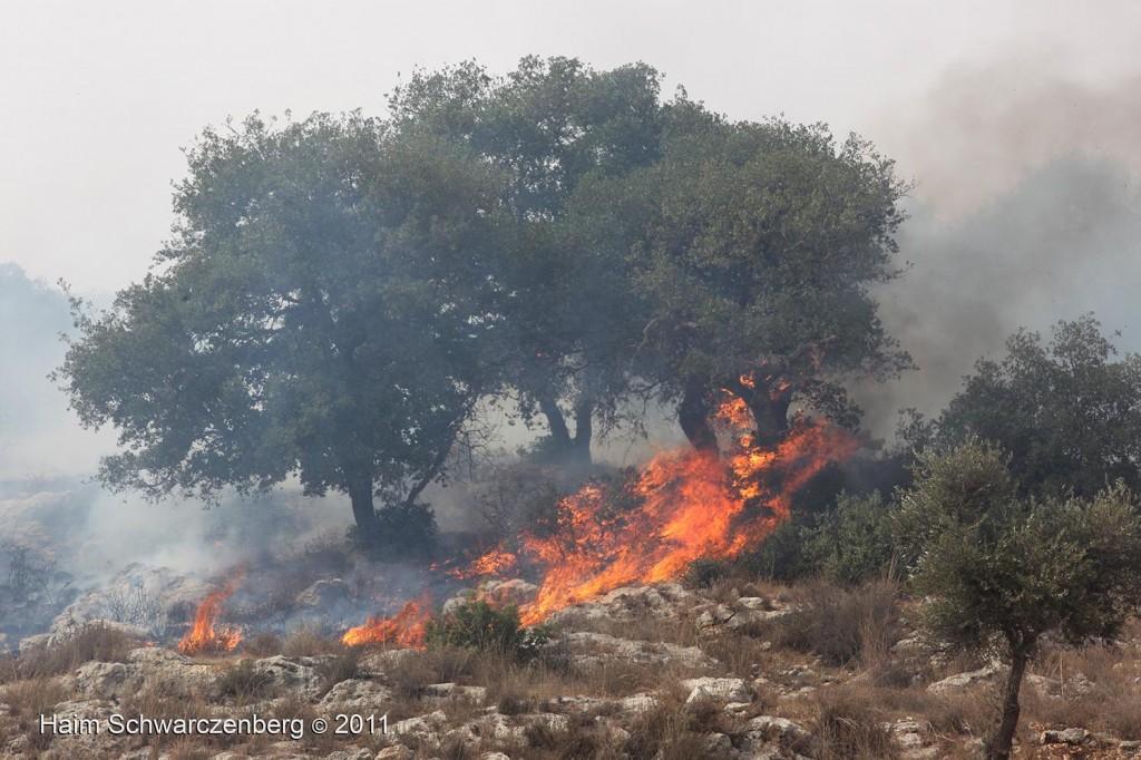 Bil'in 21/10/2011 | IMG_8445