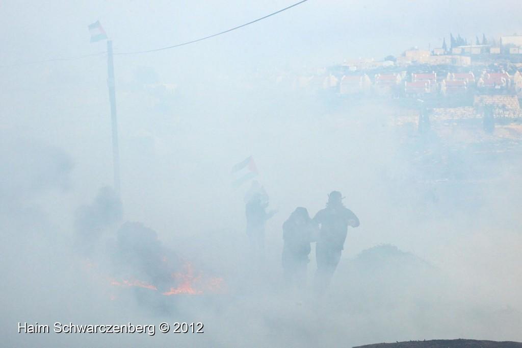 Kufr Qaddum 10/02/2012 | IMG_6894