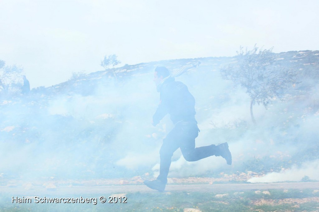 Kufr Qaddum 17/02/2012 | IMG_7849