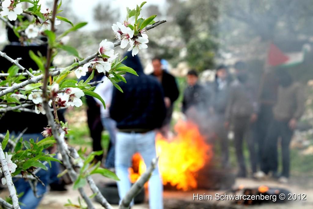 Kufr Qaddum 17/02/2012 | IMG_7905