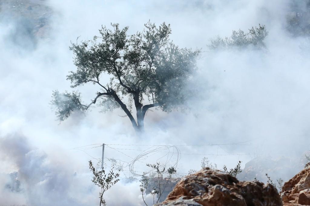 Olive Tree, Bilin