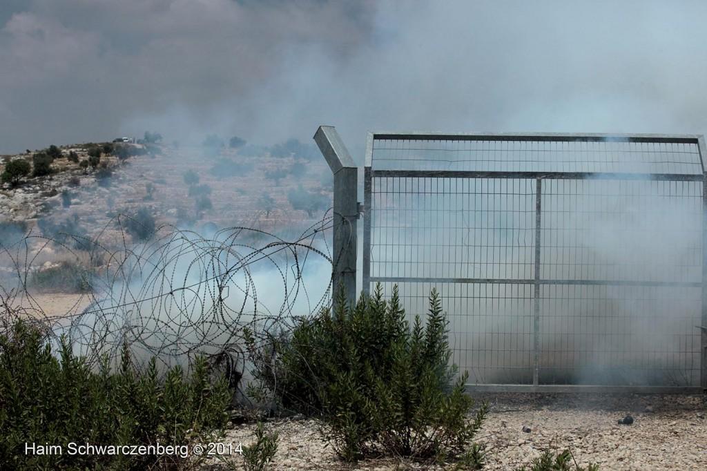 Bil'in 13/06/2014 | IMG_2489