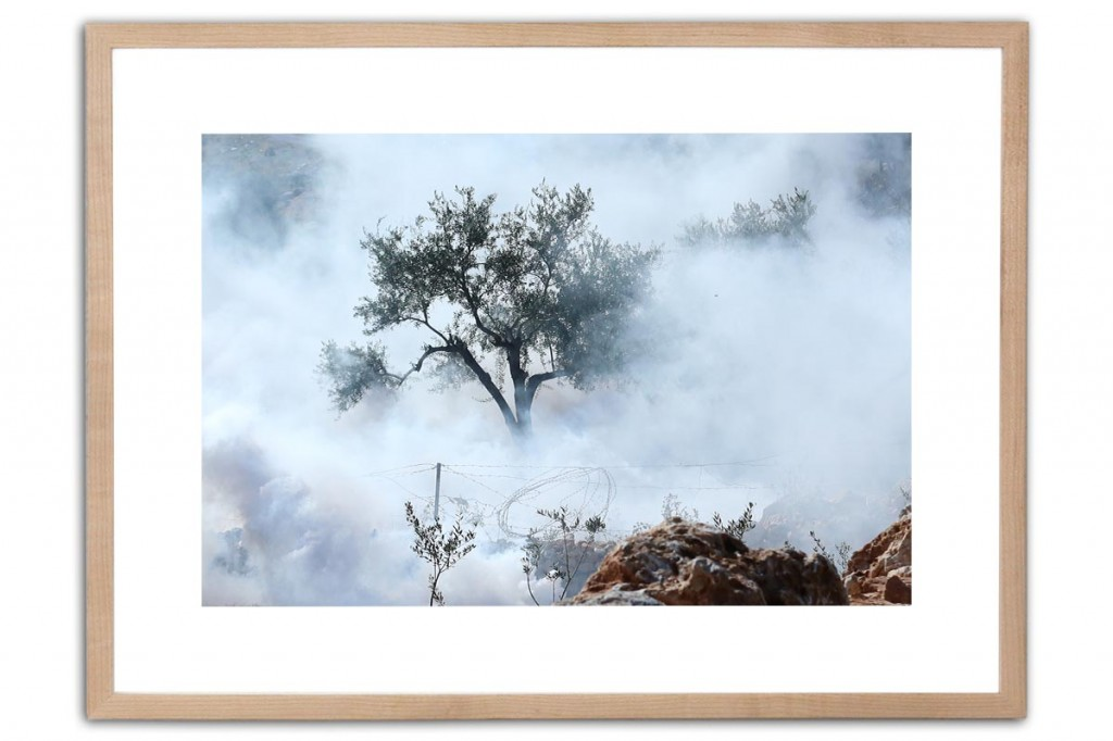 Olive tree | Photography, Inkjet Print on Fine Art paper, 42x59cm | IMG_4212