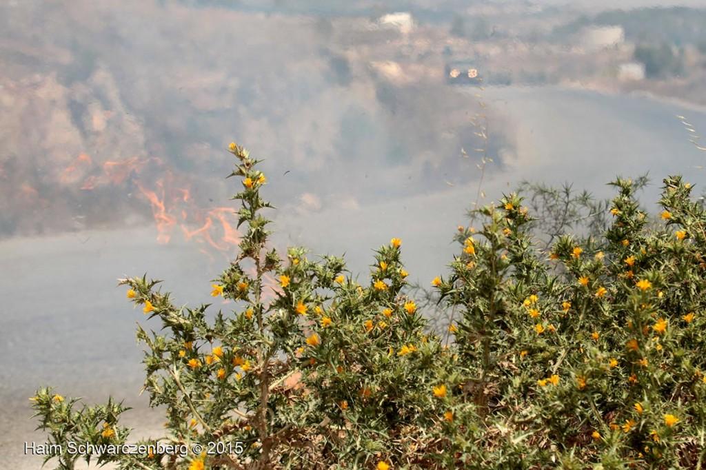Nabi Saleh 26/06/2015   IMG_8008