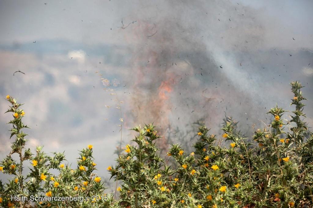 Nabi Saleh 26/06/2015   IMG_8010