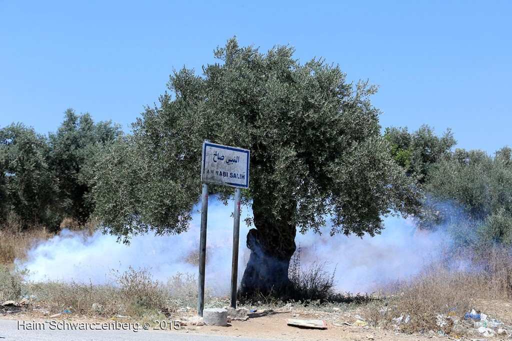 Olive Tree, Nabi Saleh